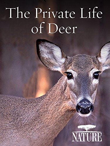 nature-the-private-life-of-deer