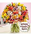200 Blooms Of Peruvian Lilies  Flowers