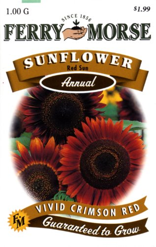 Ferry-Morse 1569 Sunflower Annual Flower Seeds, Red Sun (1 Gram Packet)