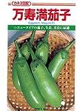 万寿満茄子  カネコの長卵形ナス種です