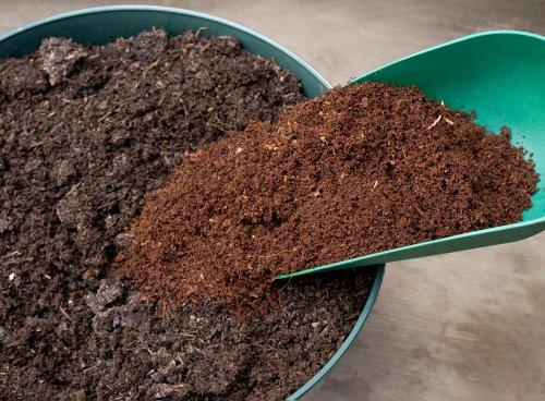 рынке много в грунте с рассадой червячки быть белье более