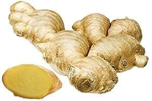 Ginger Fresh 14 Oz