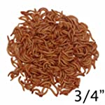 1000ct Live Mealworms, Reptile, Birds...