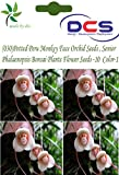 (030) Potted Peru Monkey Face Orchid Seeds,Senior Phalaenopsis Bonsai Plants Flower Seeds -10 pcs Colour-1