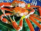 11月6日漁解禁!浜茹で直送「越前ガニ(ずわい)中 2杯」