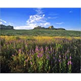 "Poster 60 x 50 cm - ""Blue vervain wildflowers and Red Cloud Buttes at Fort Robinson State Park"" von Chuck Haney..."