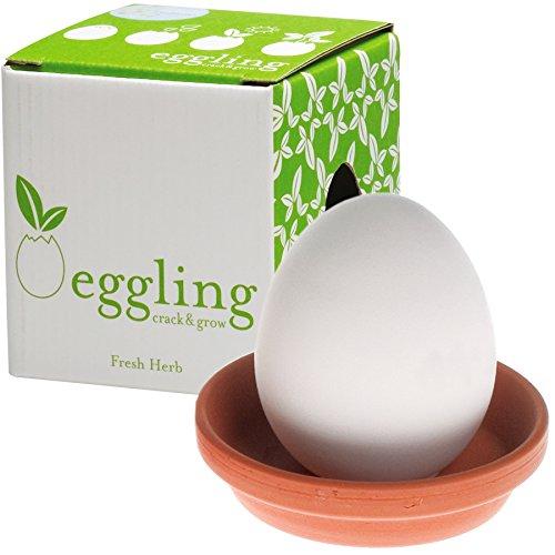 eggling-crack-grow-basil