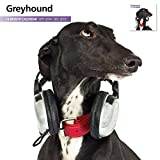 Greyhound 2015 Studio  Wall Calendar