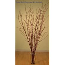 Green Floral Crafts Red Dogwood 4-5 feet tall. Double Bunch (20 stems total) (4-5 Ft, Dry)