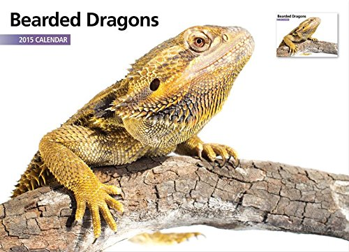 Magnet & Steel Bearded Dragons 2015 A4 Wall Calendar front-113822