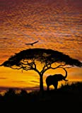 Brewster for National Geographic 4-501 African Sunset 4 Panel Mural with Paste, 6-Foot 4-Inch by 8-Foot 10-Inch