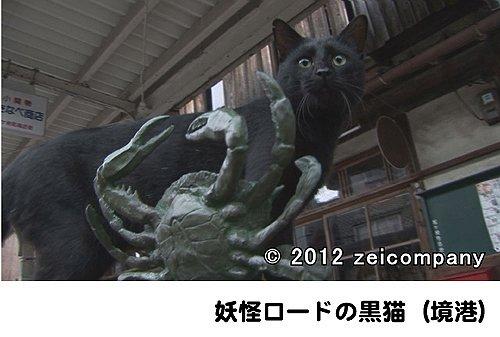 のら猫ニッポン~長崎・尾道から江ノ島・函館まで~ [DVD]