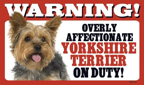 Warning Overly Affectionate Yorkshire Terrier On Duty