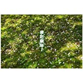 ポストカード文字入り「また来年」 散った桜の花びら  ポストカード-えはがき絵葉書postcard-