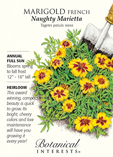 naughty-marietta-french-marigold-seeds-500-mg-botanical-interests