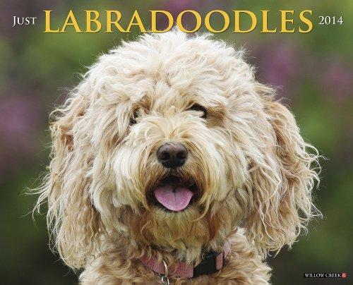 Just Labradoodles 2014 Calendar