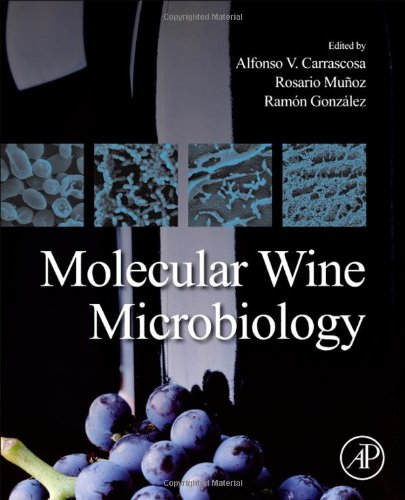Molecular Wine Microbiology back-634904