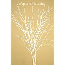 Green Floral Crafts SNOWY WHITE Birch and Beech Branches, various sizes 2 to 5 Ft Tall