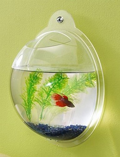 Fish Bubble - Wall Mounted Acrylic Fish Bowl (Fish Tank Small compare prices)