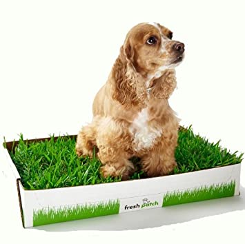 FRESH PATCH Disposable Dog Potty with REAL Grass - Pups World