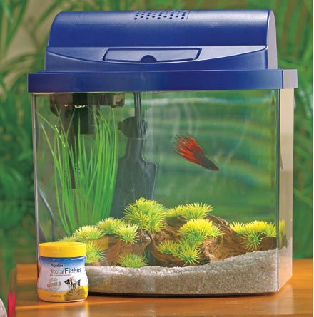 How to clean fish tank decorations how to clean for How to clean a fish tank