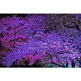Amazon.co.jp【日本の風景ポストカード】LED照明の夜桜(兵庫県姫路市)photo by今西正明 絵葉書ハガキはがき