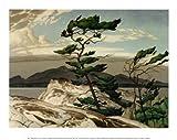 A. J. Casson - White Pine Fine Art Print (29.85 x 24.13 cm)