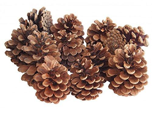 Tannenzapfen Zapfen Natur Deko Tischdeko Weihnachten Herbst