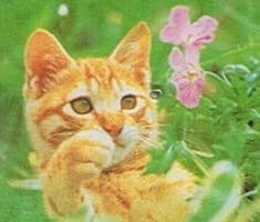 ディスクシステム 子猫物語