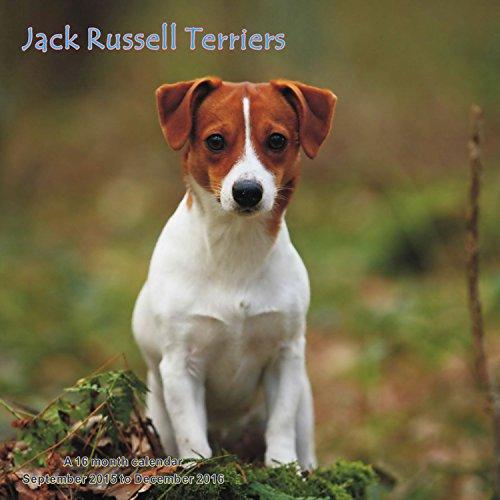 Jack Russell Terriers Calendario Calendar 2016