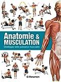 Anatomie & musculation : Développez votre puissance musculaire