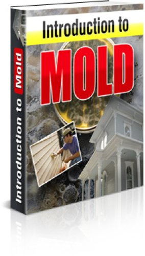 How To Protecting Your Family From Hidden Mold
