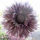 Clip Bud Vase with WARM GREY Tess Gerbera VW Mini Fiat Bongo