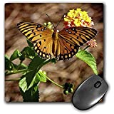 WhiteOak Photography Butterflies - A Gulf Fritillary Butterfly - MousePad