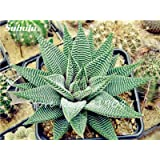 New! 20 Pcs Colorful Cactus Rebutia Variety Mix Exotic Aloe Seed Cacti Rare Cactus Office Edible Beauty Succulent Bonsai Plant 10 (Color: 10, Tamaño: Show In Picture)