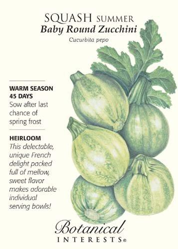 Squash Summer Baby Round Zucchini Seed