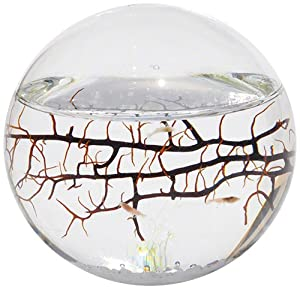 Amazon.com : EcoSphere Closed Aquatic Ecosystem, Small Sphere ...