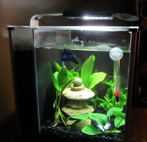 Amazon Com Fluval Spec Iii Aquarium Kit 2 6 Gallon