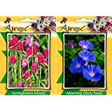 Airex Gomphrena Mixed & Morning Glory Flower Seeds ( Pack Of 15 Seeds Per Packet)