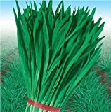 SD0157 Green Herb Chives Seeds, Organic Herb Seeds (100 Seeds)