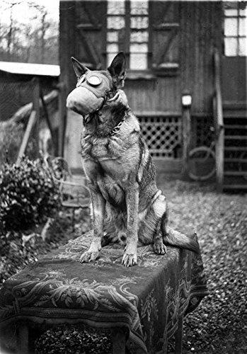 WWI, German Shepherd Dog, Gas Mask: 11''x14'' Photo Print (Gas Mask Picture compare prices)