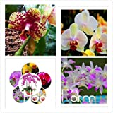 Phalaenopsis Orchids Beautiful Garden Bonsai Balcony Flower Butterfly Orchid Seeds Home Plant Seeds -50 Pcs Seeds...