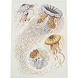 Desmonema by Ernst Haeckel (Giclée print)||EVAEX