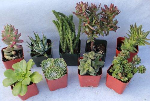 9 Misc Succulents