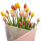 【日頃のありがとうが言いたくて】農家直送!新鮮!チューリップ花束30本 (ピンク系)