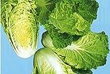 サラダ白菜(レタサイ)(生食できる白菜)福岡産