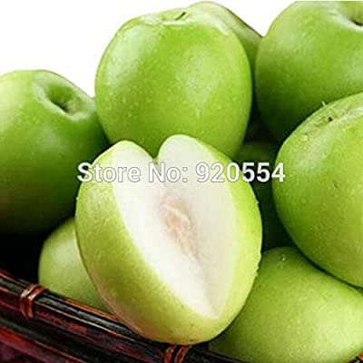 Hot selling 20pcs/lot Taiwan39;s big jujube ,sweet dates seed evergreen fruit tree bonsai plant DIY home garden by Generic