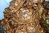 鮎の越後屋さん 那珂川 モクズガニ  3~7枚 雄雌混じり1kg