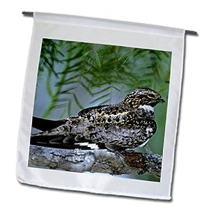 fl_94377_1 Danita Delimont - Birds - Texas, Rio Grande Valley, Common nighthawk bird - US44 BJA0092 - Jaynes Gallery - Flags - 12 x 18 inch Garden Flag