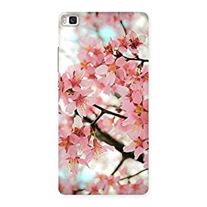 Enticing Cherry Blossoms Multicolor Back Case Cover for Huawei P8